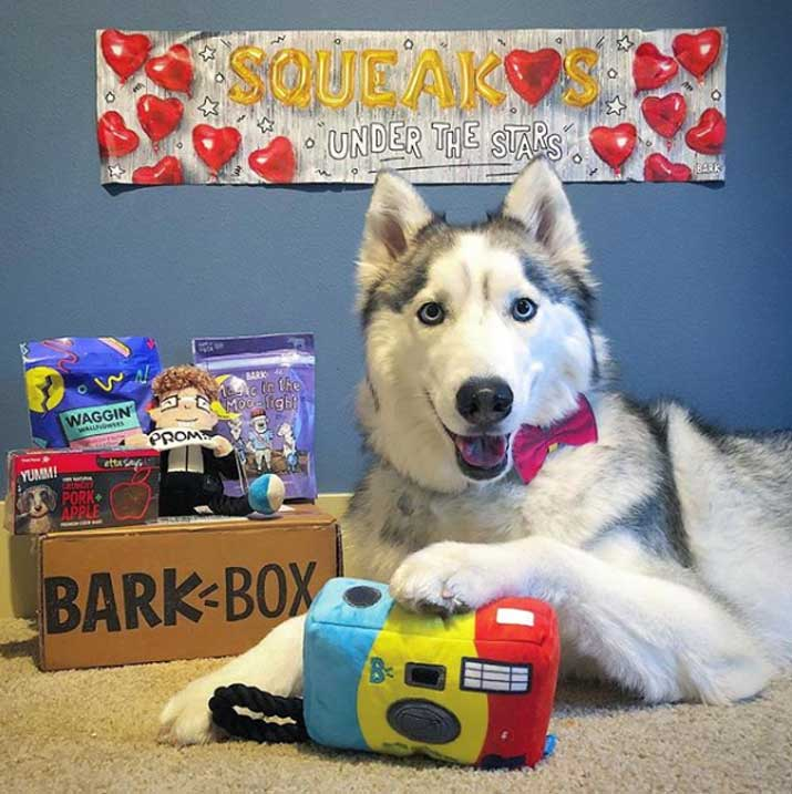 unbox barkbox