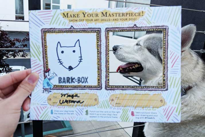 barkbox photo