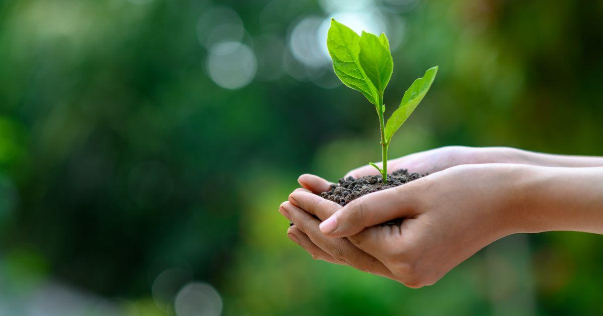 環境保護とUXデザインの両立!3つの例に学ぶ優れたサービスとは